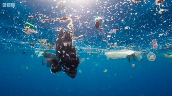 The amount of microplastic in the ocean is rising rapidly.